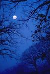 Moonblue_2