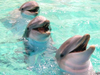 3_smiling_dolphins